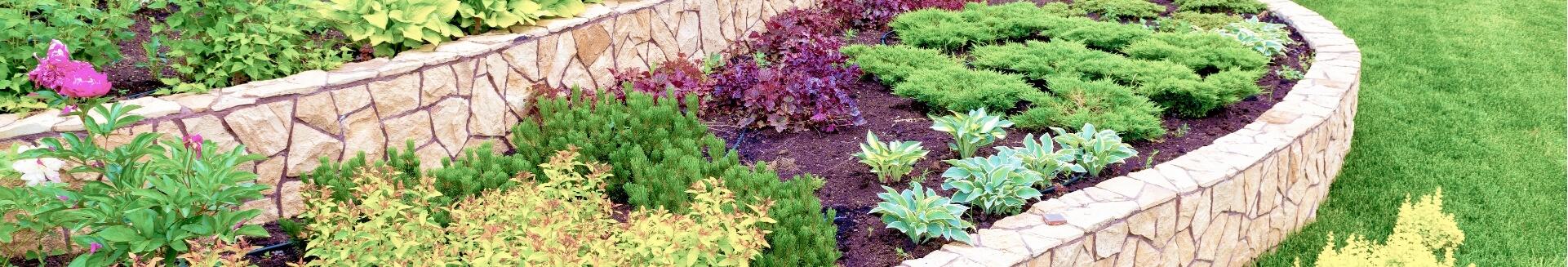 花壇の赤土の植物色々